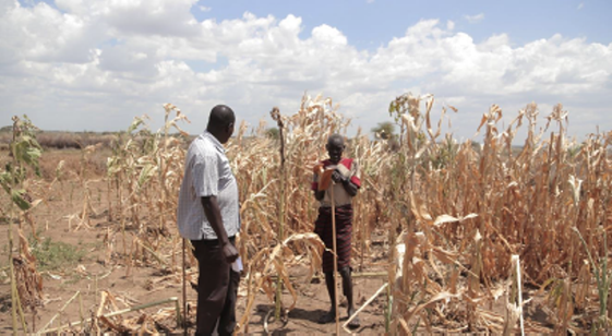 Depicts Crop Conditions in Rupa Sub-County August 13, 2015. A food security monitoring officer talking to a farmer whose maize garden totally failed.