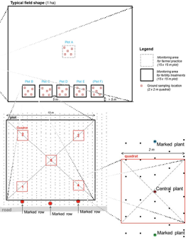 Figure 6.1 Example of quadrats selected on a field in Mali, West Africa