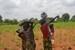 Smallholders in Mali adjust their crop management decisions thanks to satellite monitoring