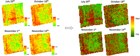 Figure 3: The WV-VI for the cotton field (left) and the corresponding MESMA weed and crop classification image (right) using the MASA modelled fractions.