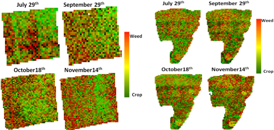 Figure 2: The MASA endmember classification image per date for the cotton field (left) and the maize field (right). Green represents the crop fraction and red the weed fraction.