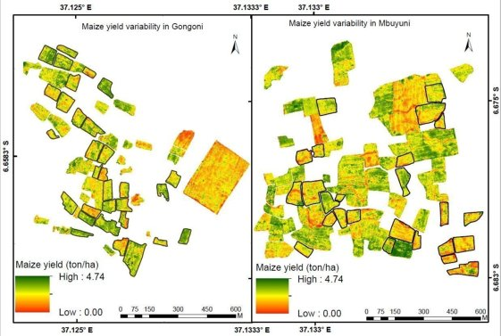 Fig 3. In field maize yield variability derived within the two study sites Gongoni (left) and Mbuyuni (right). The black boundaries indicate the sampled fields.