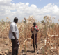STARS report showing evidence of food security issue in Karamoja Uganda