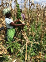 STARS report showing evidence of food security issue in Karamoja, Uganda