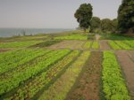 How to identify real and viable opportunities for agricultural development?